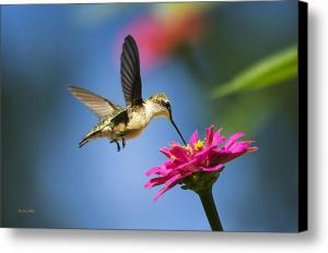 Art of Hummingbird Flight